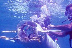 underwater_survey_ser